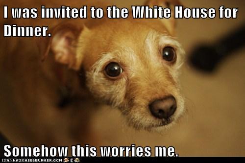 obama eating dog