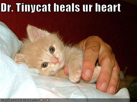 Dr. Tinycat heals ur heart