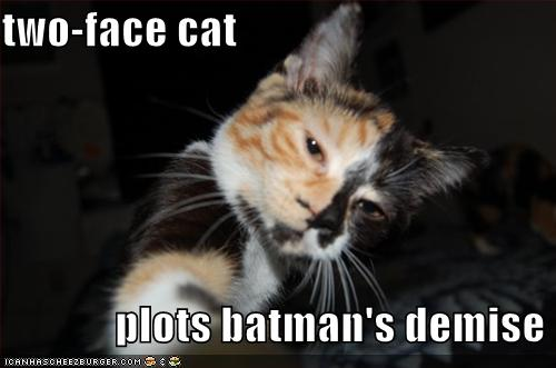 two face cat batman  