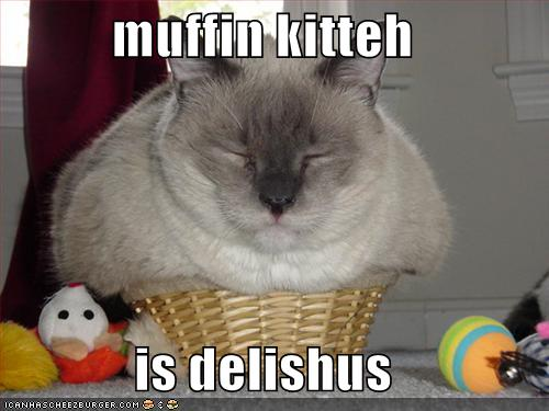kitteh on muffin