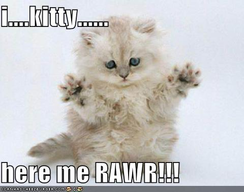 rawr kitty