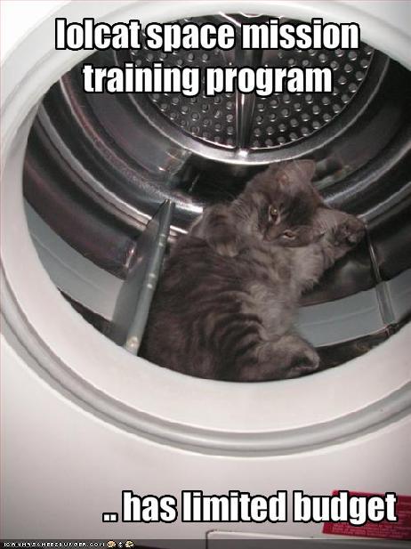 lol cat in space