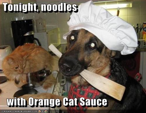 cat sauce