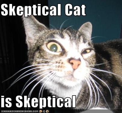 skeptical cat