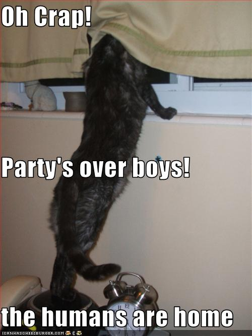  cats partys over 