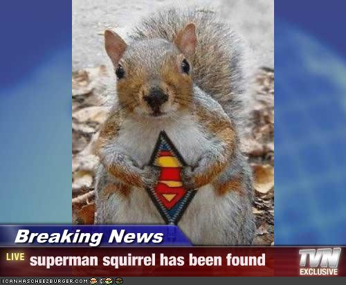 SQUIRRELS SUPERMAN