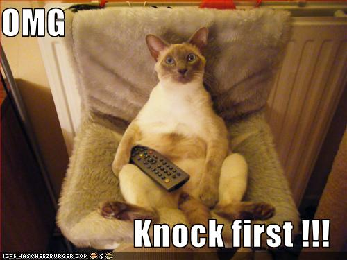 kitteh omg knock first
