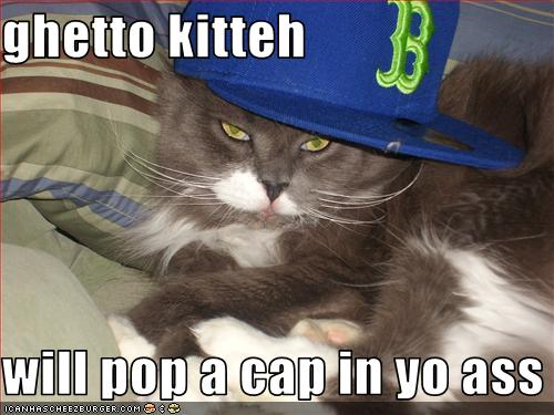 pop music kitteh