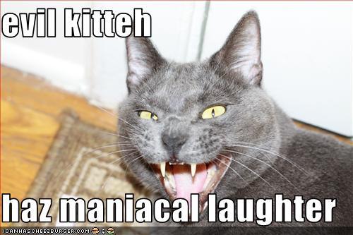 evil kitteh