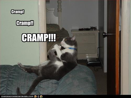 lol cat cramps