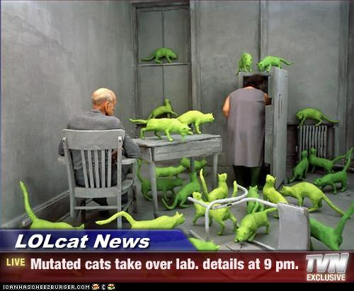 lol cat lab 