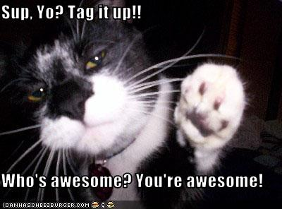 cat You re awesome