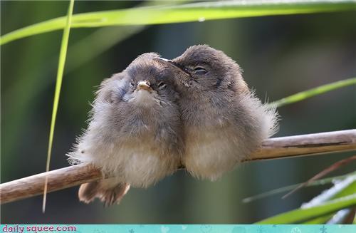 Cuddling Reed Warblers