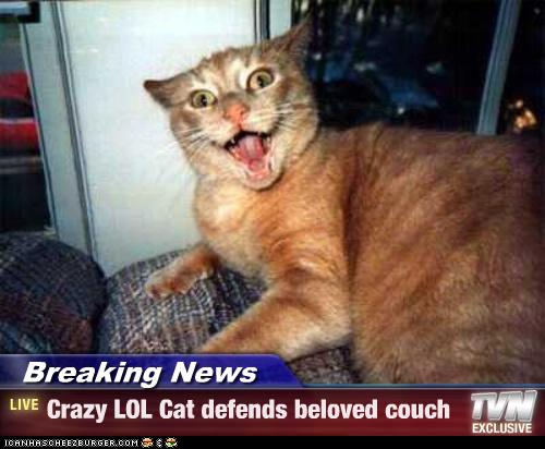 crazy lol cat