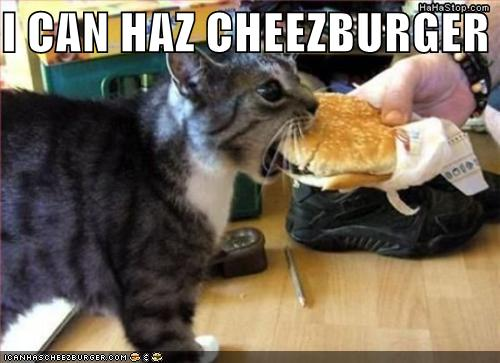 i can haz cheezburger