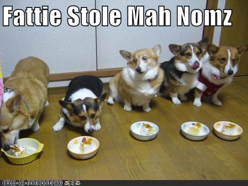 Fattie Stole Mah Nomz. 0 posted 5/20/2011. 144 Post To …