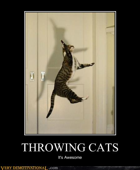 people throwing cats