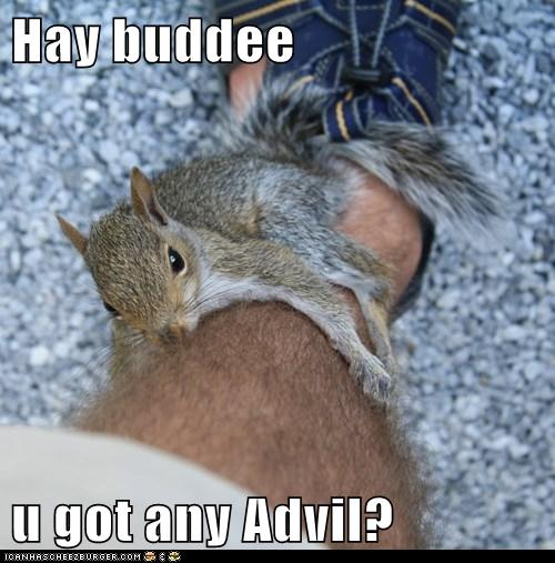 Hay buddee  u got any Advil?