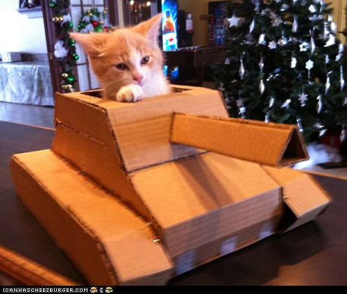 funny pictures - cat tank