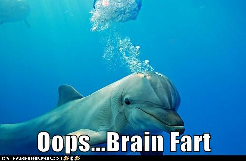 Animal Capshunz: Dumb Moment Dolphin