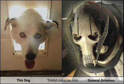 This Dog Totally Looks Like General Grievous