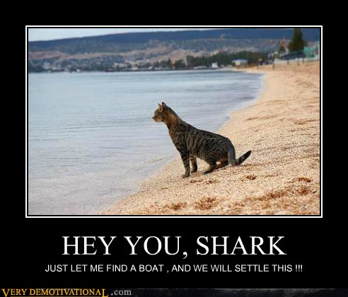 HEY YOU, SHARK