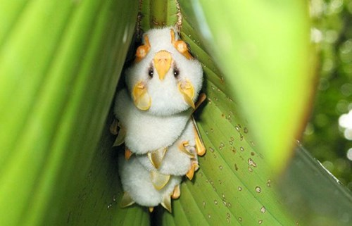 Weird Animals That Are Real And Cute 10