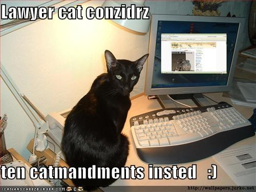 Lawyer cat considers ten catmandments instead