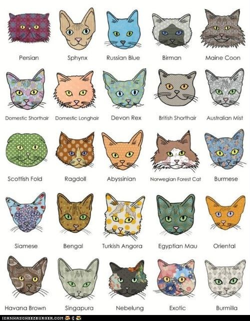 An Illustrated Guide to Cat Breeds - Cheezburger