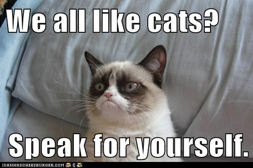 (Grumpy Cat) We all like cats? Speak for yourself.