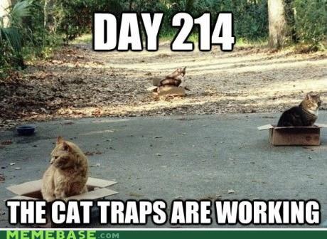 Ah Them Cats