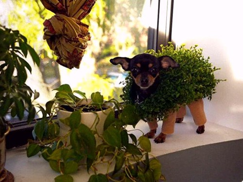 Chia Pet Halloween Costume of the Day