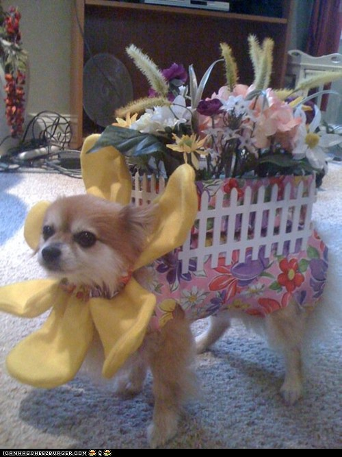 Halloween Pet Parade: Peanut in Flowers
