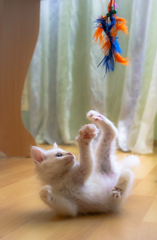 Cyoot Kitteh of teh Day: Feather Fun