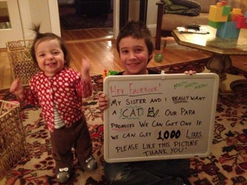 "Kids Get New Kitty after Receiving More Than 100,000 Facebook ""Likes"""