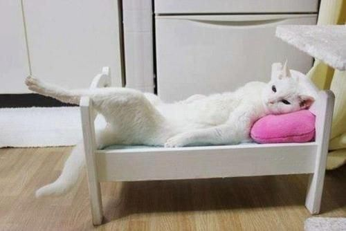 Cyoot Kitteh of teh Day: Chillin' Like a BOSS!