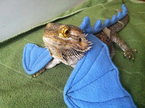Check it Out Guys! I'm a Dragon!
