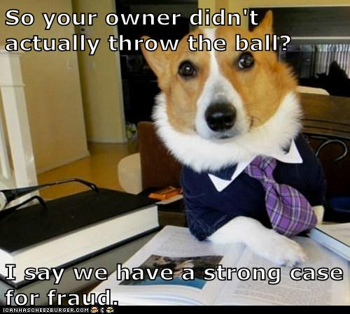 Lawyer Dog: You'll Be the One Throwing the Ball