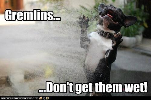 Gremlins...