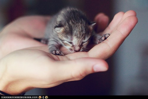 Cyoot Kitteh of the Day: Happiness in the Palm of Your Hand