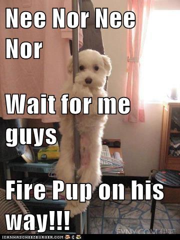 Fire Pup