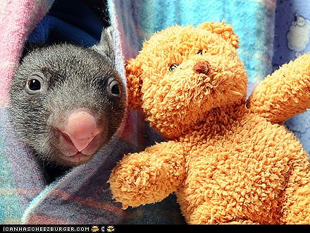 Around the Interwebs: Orphaned Baby Wombat Comes Out to Play