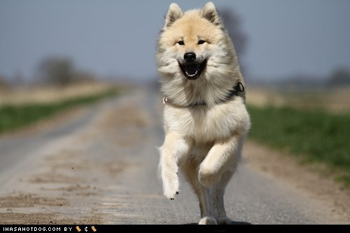 Goggie ob teh Week: Jumping for Joy