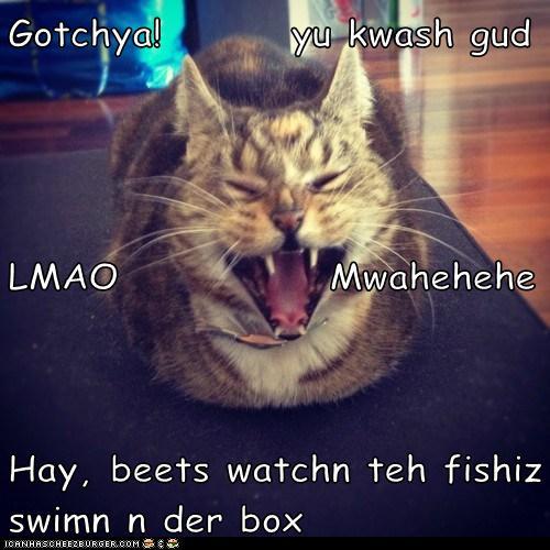 Gotchya!        yu kwash gud LMAO             Mwahehehe Hay, beets watchn teh fishiz swimn n der box