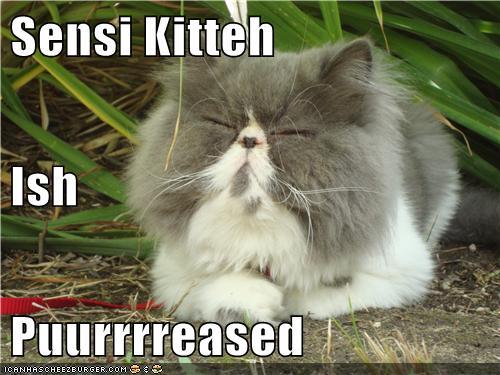 Kawaii Kitties  - Page 2 Lmjgr0dV90msws2Rp2drAw2