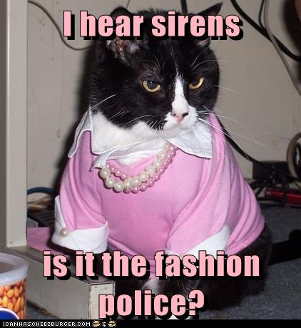fashion police cat gif
