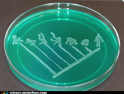 Evolution Agar!