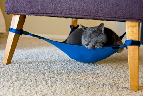 The Daily What: Your Cat Needs A Hammock of the Day