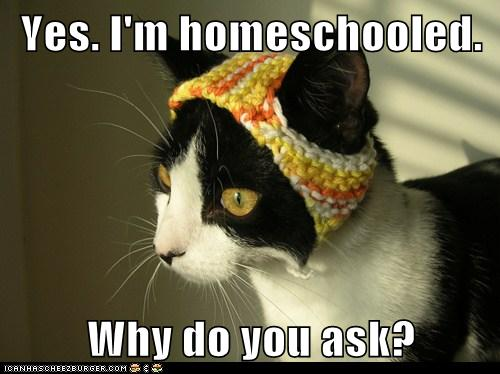 Lolcats: Yes. I'm homeschooled.