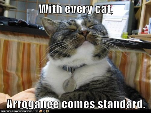 lol cat arrogance